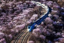 春天的列车 花海里追寻希望