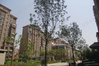 园区绿化实景图
