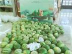 【金基御景豪】爱心助农 惠泽大众来免费领西瓜啦